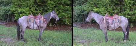 REBAS SMOKIN CRUISER, American Quarter Horse Gelding for sale in North Carolina