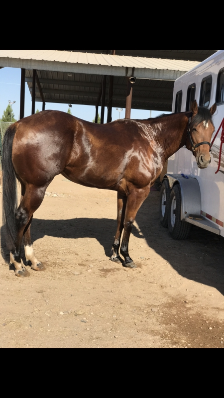 Sheza Star Kid , American Paint Horse Association Mare for sale in Arizona