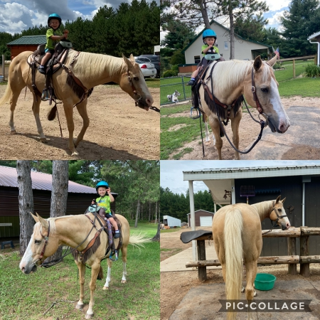 Whiskey, American Quarter Horse Gelding for sale in Wisconsin
