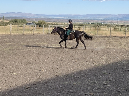 Satcha, Rocky Mountain Mare for sale in Washington