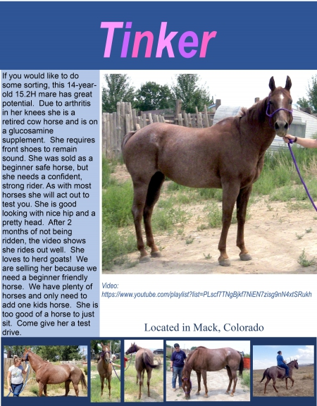 Tinker, Quarter Horse Cross Mare for sale in Colorado