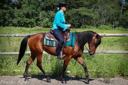 Bay Breeze, American Quarter Horse Mare for sale in Pennsylvania