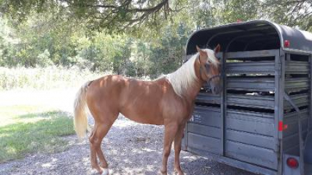 Dimond, American Quarter Horse Filly for sale in Louisiana
