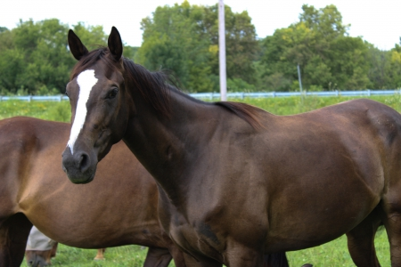 Natalies Shadow, Thoroughbred Filly for sale in Indiana