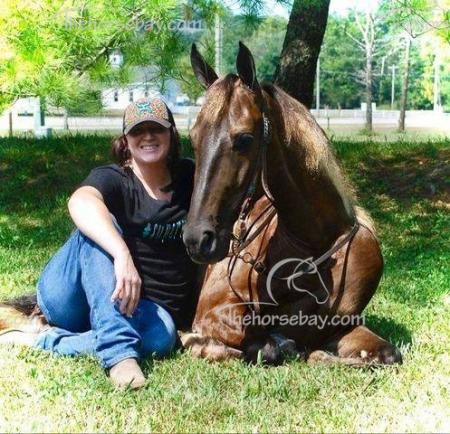 High Horse aka Rock, Rocky Mountain Gelding for sale in Kentucky