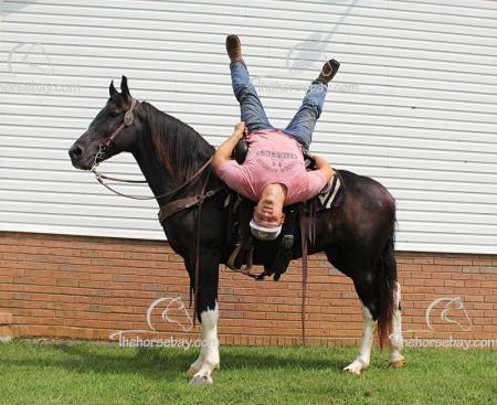 Fable, Kentucky Mountain Saddle Horse Gelding for sale in Kentucky