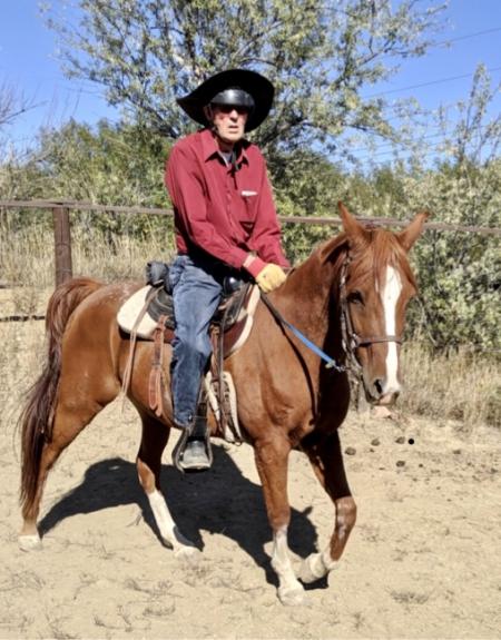 Shaatir , Arabian Gelding for sale in Colorado