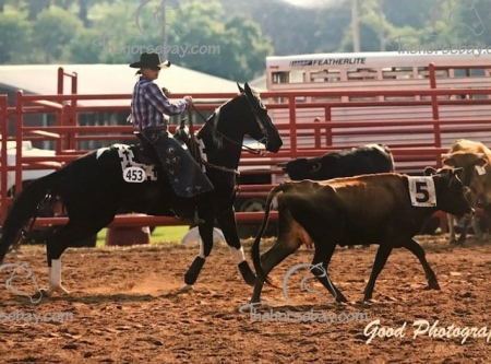 G's Rolling Sweet Pea L., Missouri Fox Trotting Horse Mare for sale in Missouri