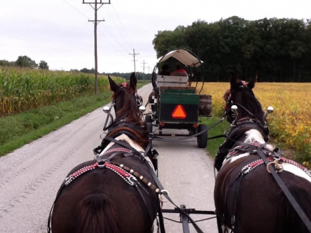 Nellie and Doc, Tennessee Walking Horses Gelding for sale in Indiana