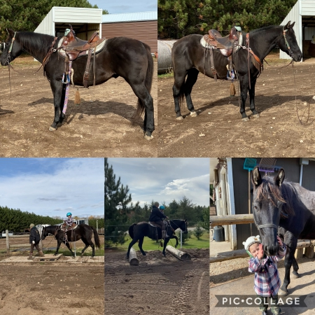Little Joe, American Quarter Horse Gelding for sale in Wisconsin