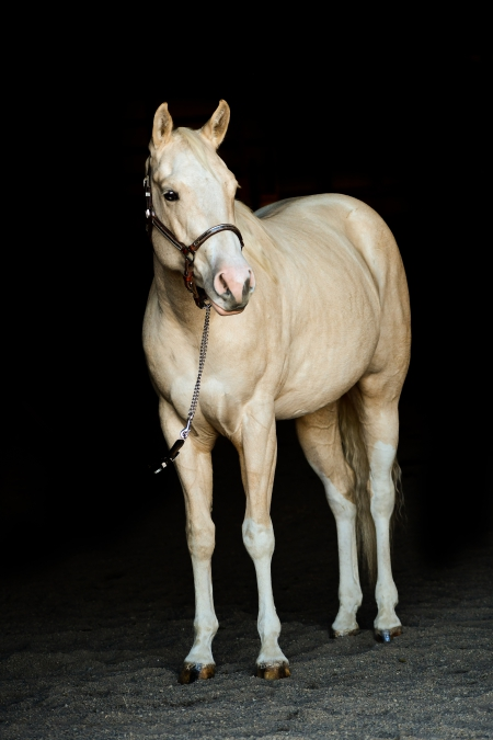 Miss Nu Peppy Chex, American Quarter Horse Filly for sale in Oregon
