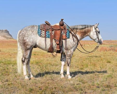 From Trash To Cash, American Quarter Horse Gelding for sale in Nebraska