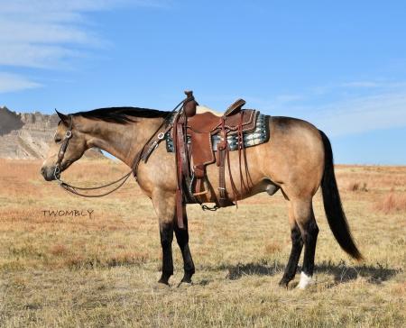 THIS WHIZ SHINES, American Quarter Horse Gelding for sale in Nebraska