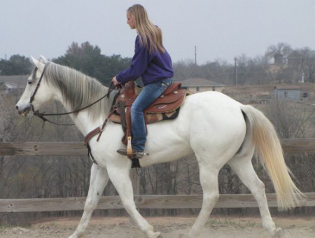 Ben, American Quarter Horse Gelding for sale in Indiana