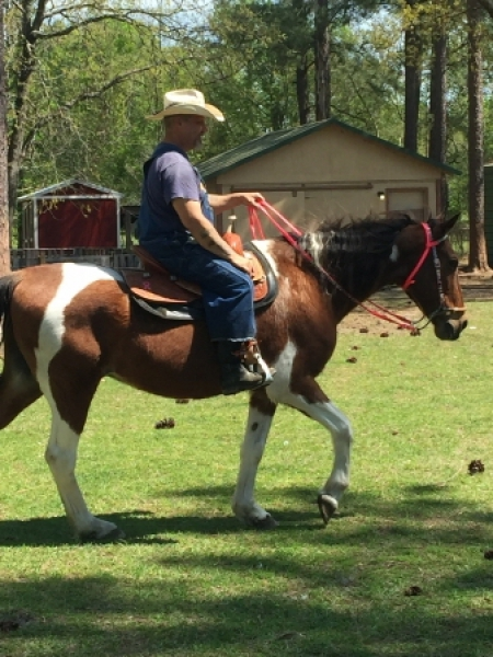 Chief, Pantaneiro Gelding for sale in South Carolina