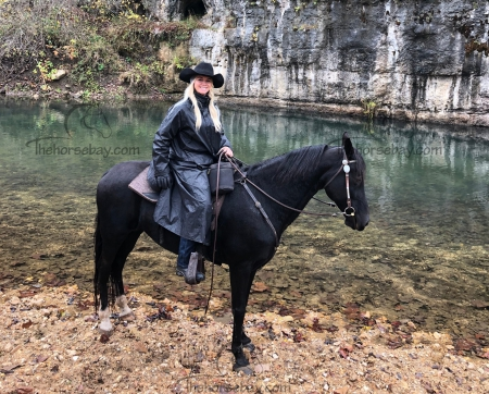 Limelights Mikimoto (Star), Tennessee Walking Horses Mare for sale in Iowa