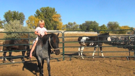 Fallen Angel, Other Filly for sale in Montana