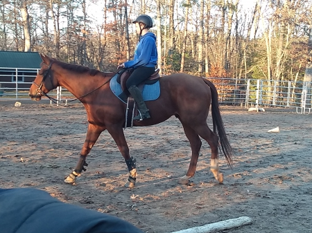 Murphy , Thoroughbred Gelding for sale in North Carolina