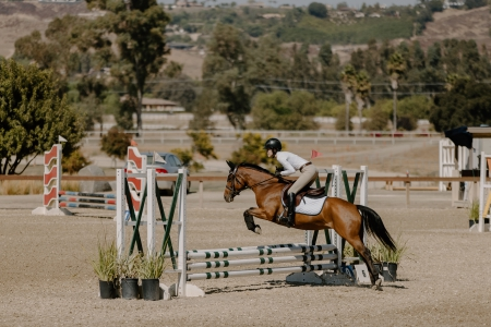 Ellie, Quarter Pony Mare for sale in California