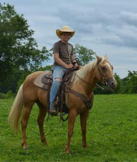 Gamora, American Quarter Horse Mare for sale in Ohio
