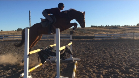 Cache Valley, Thoroughbred Gelding for sale in Colorado