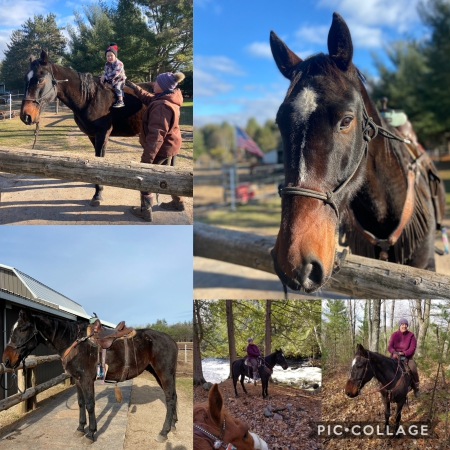 Murdoch , Standardbred Gelding for sale in Wisconsin
