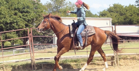 Ted, American Quarter Horse Gelding for sale in Alabama