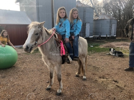 Taffy , Ponies Mare for sale in Missouri