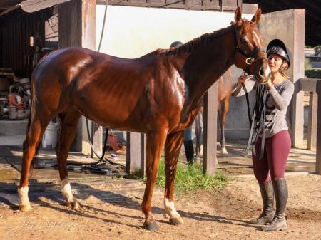 Paprika, Quarter Horse Cross Mare for sale in Arkansas