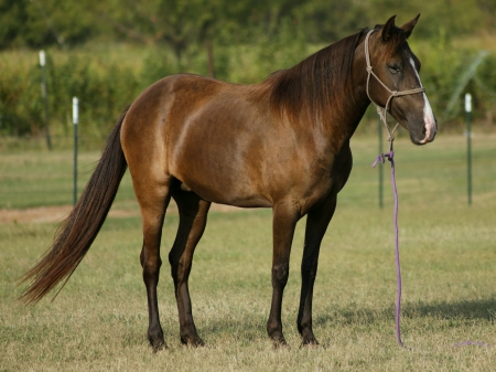 Your Kid's New Best Friend - Acorn, Ponies Mare for sale in California