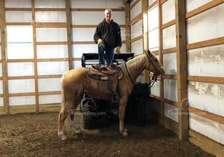Doo Da , Missouri Fox Trotting Horse Mare for sale in Arkansas