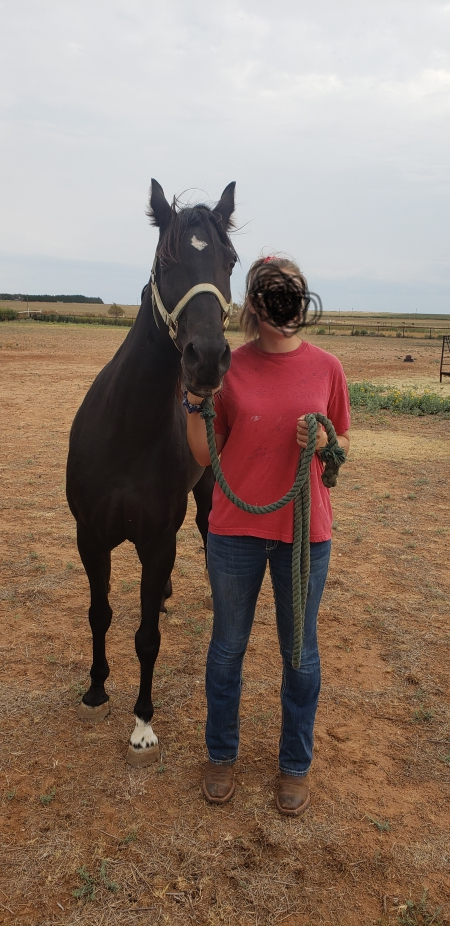 Allie, Arabian Mare for sale in Texas