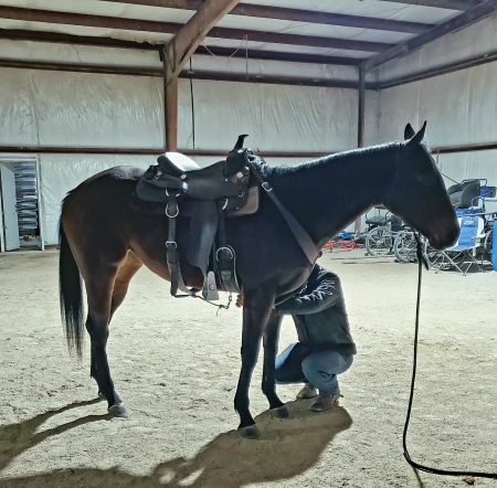Shakin N Style, Thoroughbred Filly for sale in Kentucky