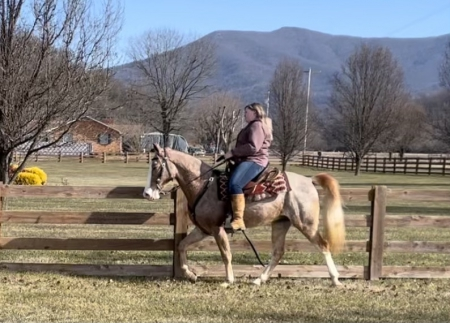 Fire Warnings Perfection, Tennessee Walking Horses Gelding for sale in Virginia
