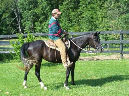 Create Your Own Beautiful Egyptian Arabian Foal Mare Lease Program, Arabian Mare for sale in Missouri