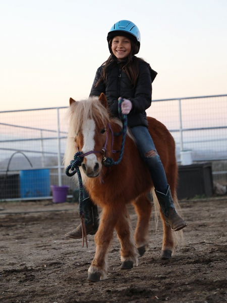 Cupcake of Rancho Bravo, Ponies Mare for sale in California