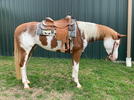 Dreamin All Big, American Paint Horse Association Mare for sale in Texas