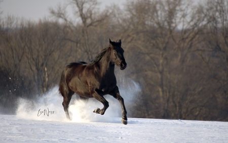 Hancock Blu Bottom, American Quarter Horse Mare for sale in Illinois