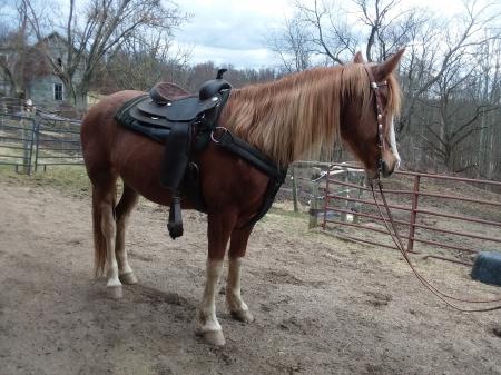 Cowboyz Cookie, American Quarter Horse Gelding for sale in Pennsylvania