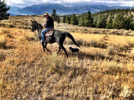 Bogs, Arabian Gelding for sale in Montana