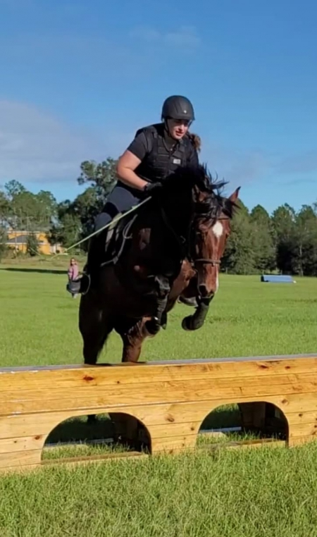 JBS Miss Sweet Chic, American Quarter Horse Mare for sale in Florida