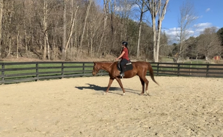 Dudley, Thoroughbred Gelding for sale in New York