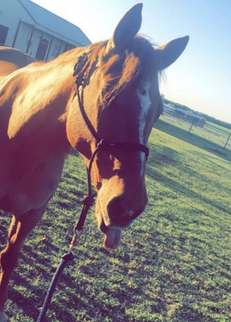 Trapper Slade , Quarter Horse Cross Gelding for sale in Texas