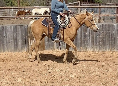 Wimberly , Quarter Horse Cross Mare for sale in Texas