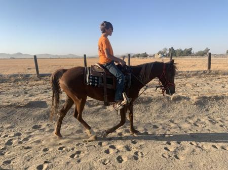 Lola, Rocky Mountain Mare for sale in California