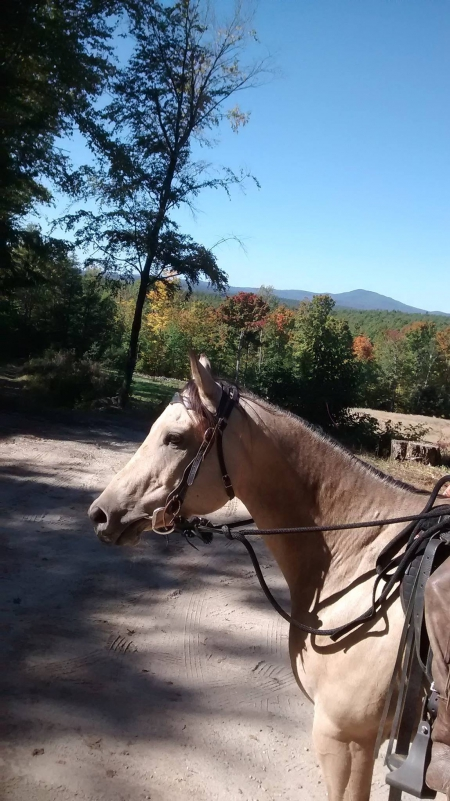 Kid, Appaloosa Gelding for sale in New Hampshire