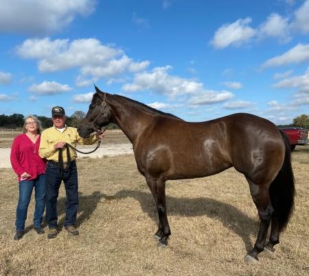 FLAUNTIT IFYA GOT IT, Appaloosa Mare for sale in Texas