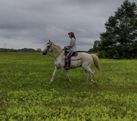 Trooper, Walkaloosa Gelding for sale in New York
