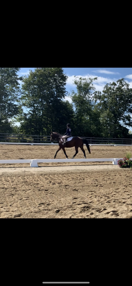 Lily, Welsh Pony Mare for sale in Vermont