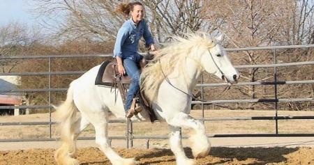 15.2HH ,7 Yrs Old Gray & White Tobiano Mare Gypsy Vanner For Sale, Gypsy Vanner Mare for sale in Texas